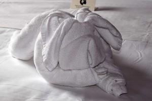 Zum Hund gefaltetes Handtuch