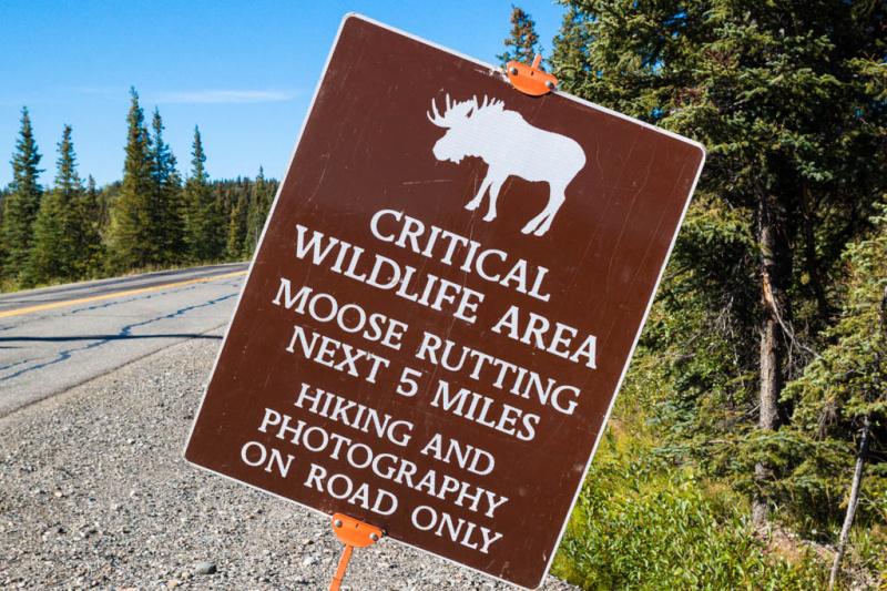 Es wird fleißig vor Elchen gewarnt - gesehen habe ich keinen