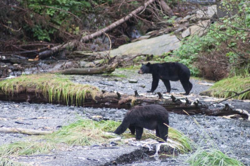 Bären im Doppelpack