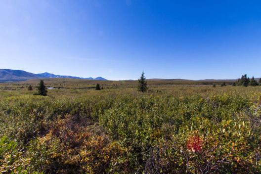 Tundra vom Mountain Vista im Denali National Park betrachtet