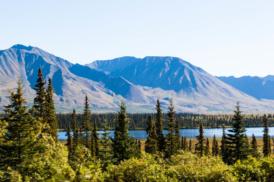 Am Parks Highway auf dem Weg von Anchorage zum Denali National Park