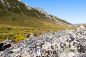 Am Savage River im Denali National Park