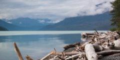 Treibholz am Kenai Lake