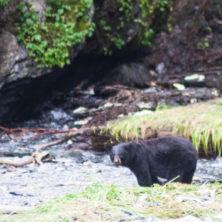 An die Bären in der Nähe von Valdez erinnere ich mich gerne.