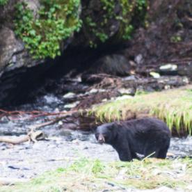 """An die <a href=""""https://www.reise-wahnsinn.de/auf-baerenjagd-in-alaska/7676"""">Bären in der Nähe von Valdez</a> erinnere ich mich gerne."""