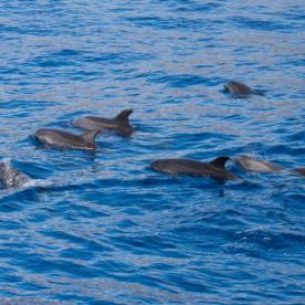 Die Pilot-Wale vor La Gomera konnte ich erleben