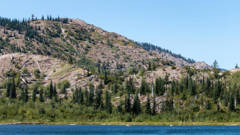 Tote Bäume am Meta Lake