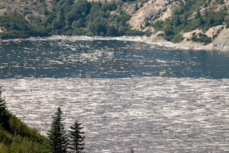 Treibende Baumstämme auf dem Spirit Lake