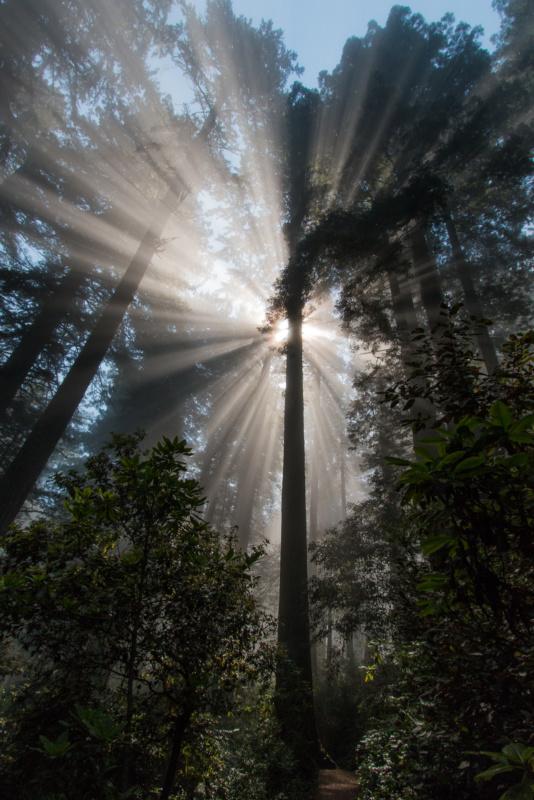Die ersten Sonnenstrahlen brechen durch den Nebel