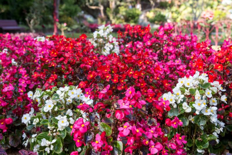 """Blumen im Stadtpark """"Jardim Duque da Terceira"""" in Angra do Heroísmo"""