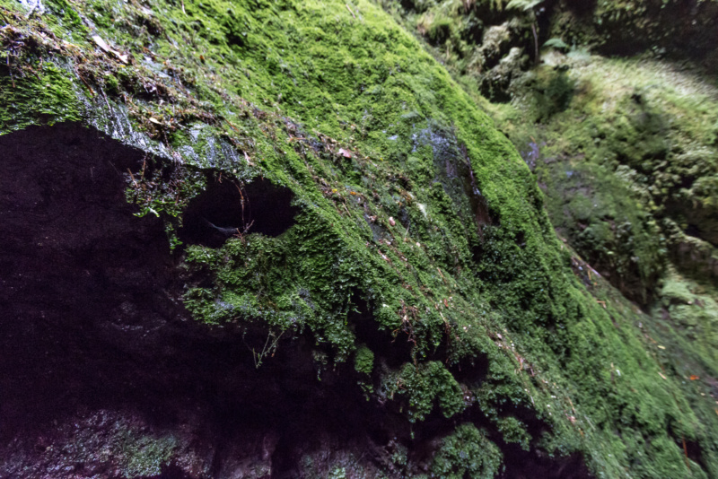Moos auf den Wänden der Algar do Carvão