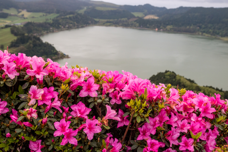 Bunte Blumen oberhalb der Caleiras