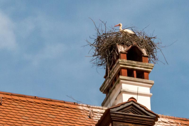 """Der """"Haus-Storch"""" des Lindner Hotel Schloss Reichmannsdorf"""