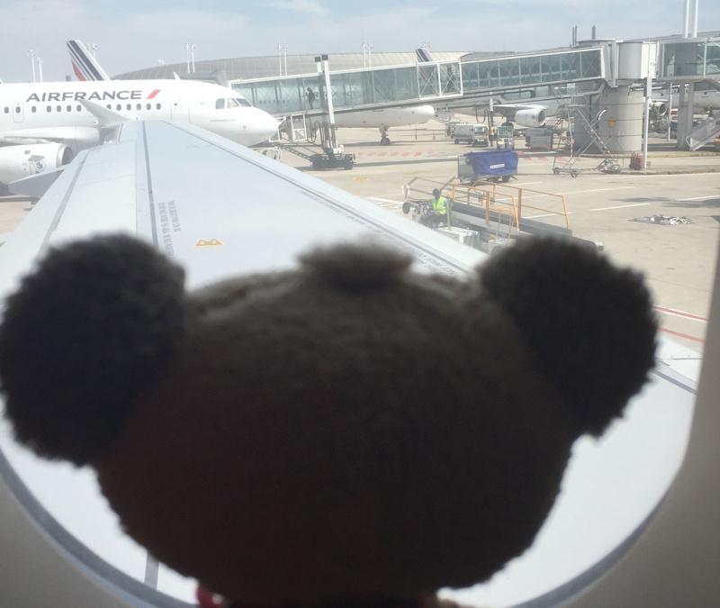 Pimbolino begleitet Nick seit 9/11 auf jedem Flug, Foto: Niclas Bocionek