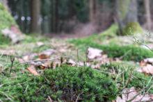 Erstes Grün in der Nähe der Vollmequelle