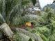 Das Maison Rousse liegt versteckt im Dschungel Martiniques
