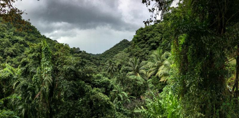Der Dschungel rund um das Maison Rousse