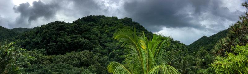 Der tropische Regenwald rund um das Maison Rousse