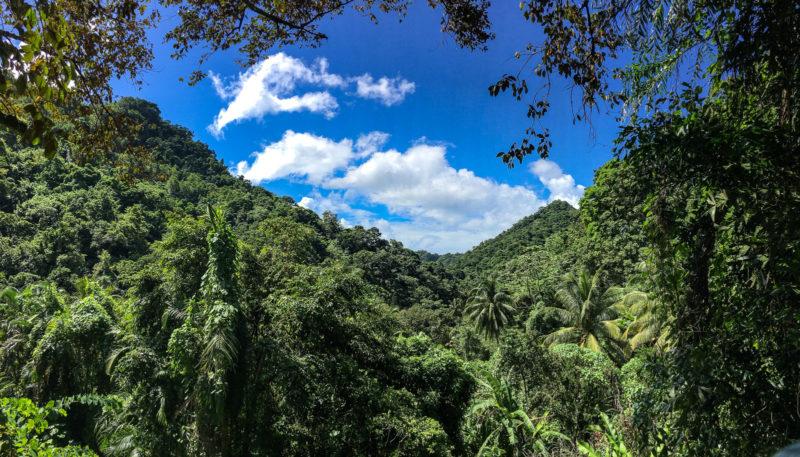 Über dem Dschungel scheint auch mal die Sonne...