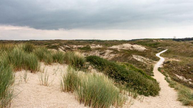 Direkt hinter den Stranddünen ändert sich der Bewuchs