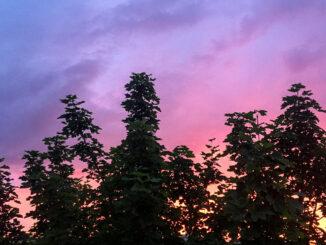 Sonnenuntergänge in Köln sind auch hübsch anzusehen...